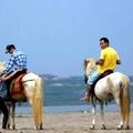 Hà Nội : Cưỡi ngựa ở bãi đá Sông Hồng \m/