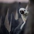 Rừng đá kỳ bí trên đảo Madagasca<<< Thật tiếc khi chưa được đến đây!