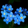 Horoscope tuần này của bạn (26/3 - 1/4/2012)