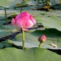 Tết này chơi hoa gì, hoa gì độc đáo và đem lại may mắn đầu năm?