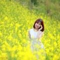 Rực vàng cánh đồng hoa cải Yên Bái