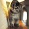 Tôi cực lực phản đối topic này vì rõ ràng mèo dễ thương hơn chó. Đề nghị ace linkhay cùng tôi tỏ thái độ tương tự !