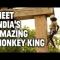 Vua của loài khỉ ở Ấn Độ