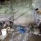 Chó bị nhồi tàn bạo trước khi đem bán lấy thịt