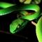 Trần Hưng Đạo tử vong do rắn độc cắn