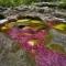 """Công ty du lịch Fiditour xin giới thiệu dòng sông nhiều màu sắc được mệnh danh là """"Dòng sông chảy"""