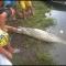Xem Trăn nuốt chửng cá sấu