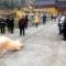 Chú lợn quỳ 2 chân trước cổng chùa hàng tiếng không chịu đứng lên