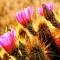 Xương rồng nở hoa (Kỳ 2)