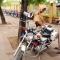 Không mang bảo hiểm, đăng ký xe máy bị phạt thế nào?