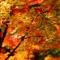 Ngắm lá vàng - nét văn hóa đặc trưng của người Nhật Bản