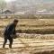 """Triều Tiên thử nghiệm mô hình """"khoán nông nghiệp"""""""