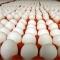 Trứng nhiễm độc gây ung thư bị Singapore trả lại, đưa về bán cho dân Việt