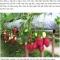 BKAV  thừa nhận ko dùng ảnh chụp từ Bphone mà chỉ dùng ảnh minh họa