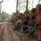 Số gỗ trong vụ thành phố chặt hạ 6700 cây xanh đã có chủ