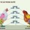 Cách nào để gà Việt không cần rẻ vẫn cạnh tranh được với gà Mỹ?