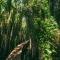 Ngất ngây với con đường xuyên qua rừng tràm cực lãng mạn ở Long An