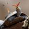 Cận cảnh đàn bướm uống nước mắt rùa, cá sấu để giải khát