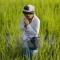 Chính phủ Thái Lan kêu gọi nông dân trên cả nước dừng trồng lúa