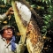 Lưu ý về chất lượng mật ong rừng tràm U Minh Hạ