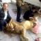 Vườn thú gây tranh cãi vì xẻ thịt sư tử công khai ở Đan mạch