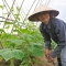 Cần có Luật Bảo hiểm nông nghiệp