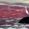 Video: Thủy triều đỏ nguy hiểm và đáng sợ như thế nào?