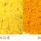 Sự khác biệt giữa tinh bột nghệ và bột nghệ