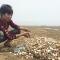Hơn 60 tấn ngao chết trắng biển Hà Tĩnh