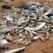 Từ chuyện cá chết, Phật giáo cần làm gì trước thảm hoạ môi trường