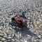 [FB] Nhận định của 3 nhà khoa học: Chuyện bé như hạt gạo hay thảm họa quốc gia?