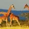 Giao Vinpearl đầu tư dự án công viên Sài Gòn Safari