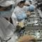 60.000 công nhân Foxconn được thay bằng robot