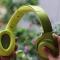 """Xin lỗi Beats Studio, """"siêu phẩm"""" này của Sony đã định nghĩa lại thế nào là 1 chiếc tai nghe không dây cao cấp"""
