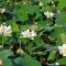 Ngây ngất với 12 loại sen lạ và cực quý hiếm ở đầm Ninh Sở
