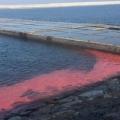 Vệt nước đỏ ở biển Vũng Áng là do con người xả thải