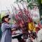 Hà Nội rực rỡ sắc Xuân khi hoa đào sớm xuống phố