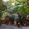 Chặt cây ở Hà Nội: cứ để yên, đừng có điên mà bắt chước ngày ấy trồng cây ấy