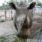 vườn thú của đại gia Lê Thanh Thản có cặp tê giác siêu hiếm