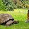 Cụ rùa già nhất thế giới vẫn đang sống khỏe ở tuổi 183