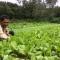 Nông dân bán được rau sạch giá gấp 15 lần so với cách làm cũ