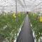 Việt Nam đã thành công trồng rau không cần đất