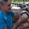 Chú chim cánh cụt mỗi năm vượt 8.000km thăm người cứu mạng