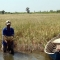 Toàn bộ Đồng bằng sông Cửu Long đã bị xâm nhập mặn :(
