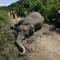 Giết hơn 200 con voi,  người Trung Quốc bị phạt 46 triệu ÚsD 30 năm tù