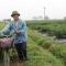 bí kíp Chống mặn ở xã Bình Dương: biến đất hoang thành cánh đồng vàng
