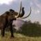 voi mamut cuối cùng tuyệt chủng là vì khát nước