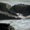 Hải cẩu xứ lạnh lạc đàn liên tục xuất hiện ở vùng biển Bình Thuận
