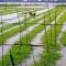 Người miền Tây ngóng lũ: đã 3 năm nay ko có mùa nước nổi quen thuộc