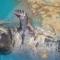 Hải cẩu ở Quảng Nam được bàn giao cho Viện Hải dương học Nha Trang